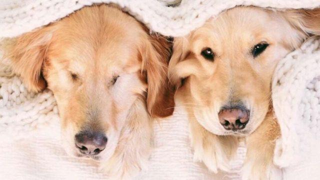Ένας τυφλός σκύλος έχει για οδηγό μια σκυλίτσα που είναι πάντα δίπλα του – Πραγματικά υπέροχες εικόνες. - Εικόνα 5