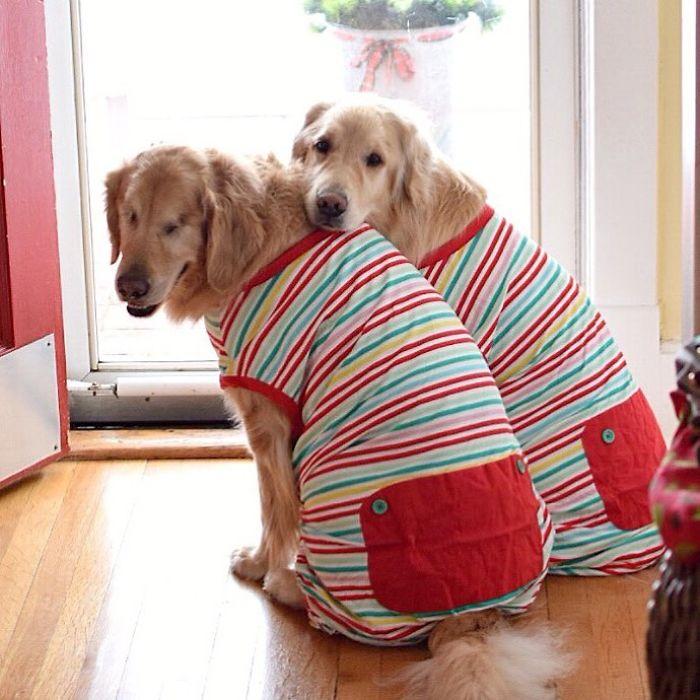 Ένας τυφλός σκύλος έχει για οδηγό μια σκυλίτσα που είναι πάντα δίπλα του – Πραγματικά υπέροχες εικόνες. - Εικόνα 2
